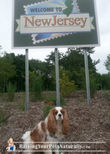 Traveling with Dogs: New Jersey