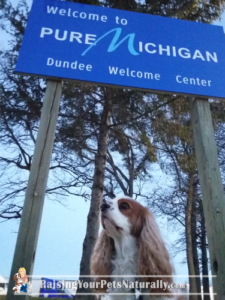 Dog-Friendly Road Trips: Michigan