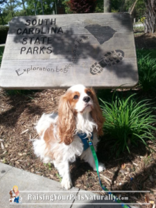 Dog-Friendly South Carolina