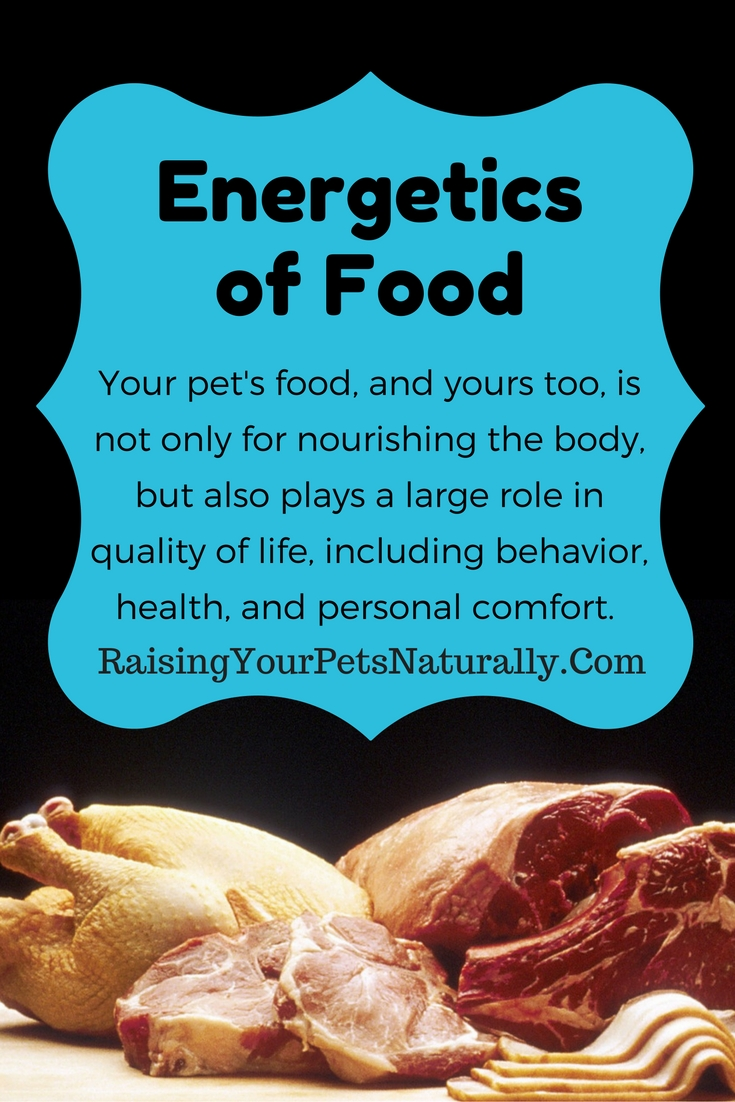 Did you know that your pet's food also affects your pet's internal temperature? Your pet's food, and yours too, is not only for nourishing the body, but also plays a large role in quality of life, including behavior, health, and personal comfort. According to Traditional Chinese Medicine (TCM), everything in life has a balance of energy and heat: think Yin and Yang. Yin represents female, cold, dark, quiet, and inward, whereas Yang represents male, hot, light, loud, and outward.