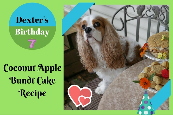 Homemade Healthy Birthday Cake Recipe For Dogs Coconut And Apple Dog