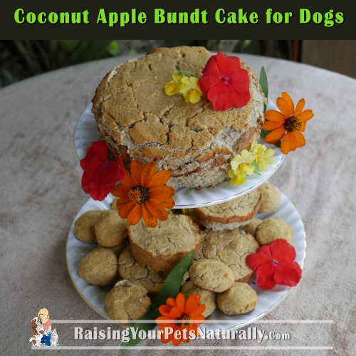 Healthy Dog Cake Recipe