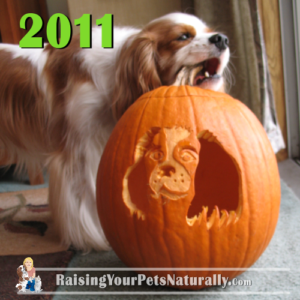 Dexter's Dog Pumpkin