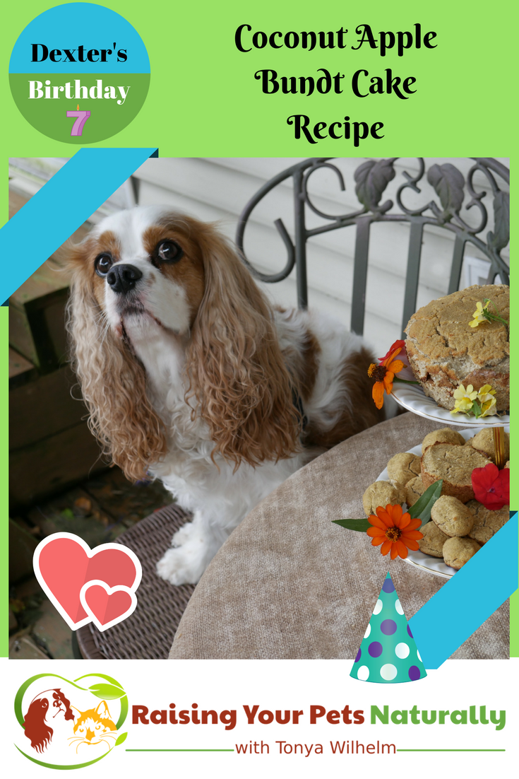 Homemade Healthy Birthday Cake Recipe for Dogs. Coconut and apple dog birthday cake recipe. No flour, wheat or sugar.  Healthy and fun. #raisingyourpetsnaturally