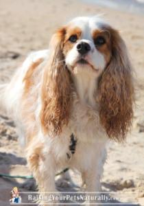 Dog-friendly Indiana Beachs