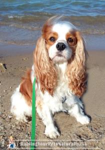 dog friendly beaches near me