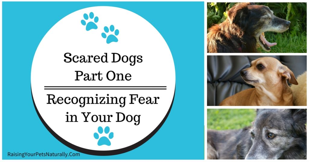Recognizing Fear in Your Dog