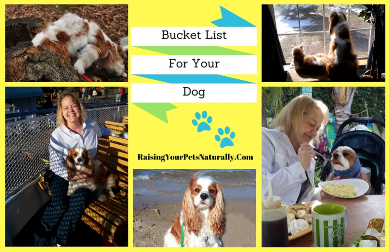 Bucket List Ideas for You and Your Dog. What would your dog consider the best bucket list? Here are some fun ideas that you and your dog can easily do. #raisingyourpetsnaturally