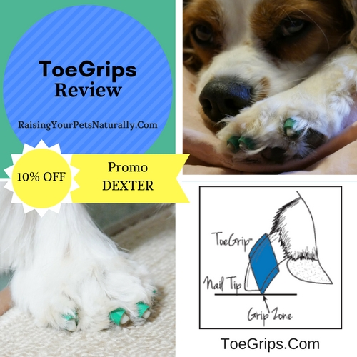 "My vet and I thought that ToeGrips might benefit Dexter in helping him ""grab"" walking surfaces, so I contacted Dr. Julie Buzby, the founder of ToeGrips, to see if we could try them and provide a review. Dr. Buzby was more than happy to allow Dexter and me to try a set, to see if they would provide proprioceptive stimulus and help Dexter to pick up his feet."