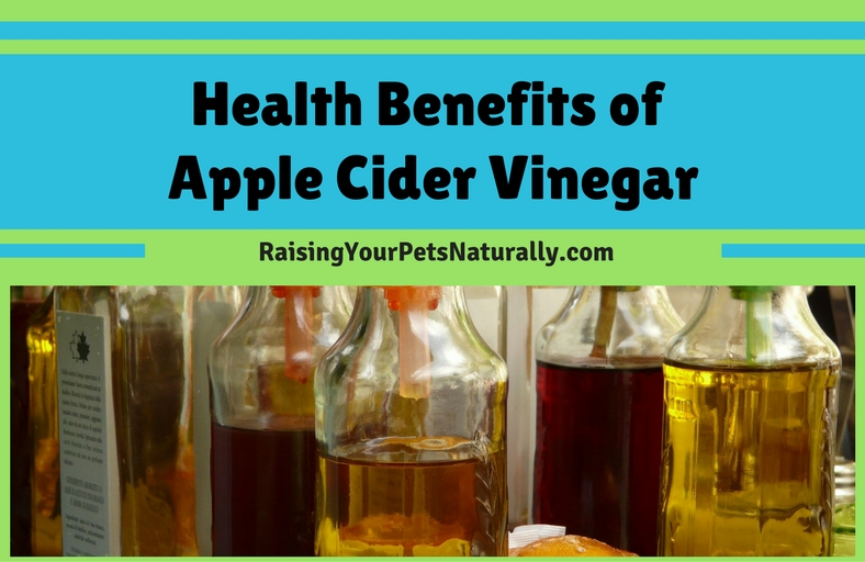 Health Benefits of Apple Cider Vinegar for Dogs, Cats and Us.