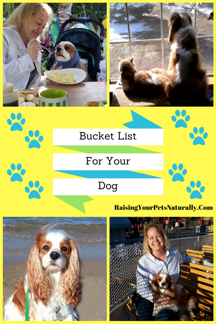 Bucket List Ideas for You and Your Dog. What would your dog consider the best bucket list? Here are some fun ideas that you and your dog can easily do.