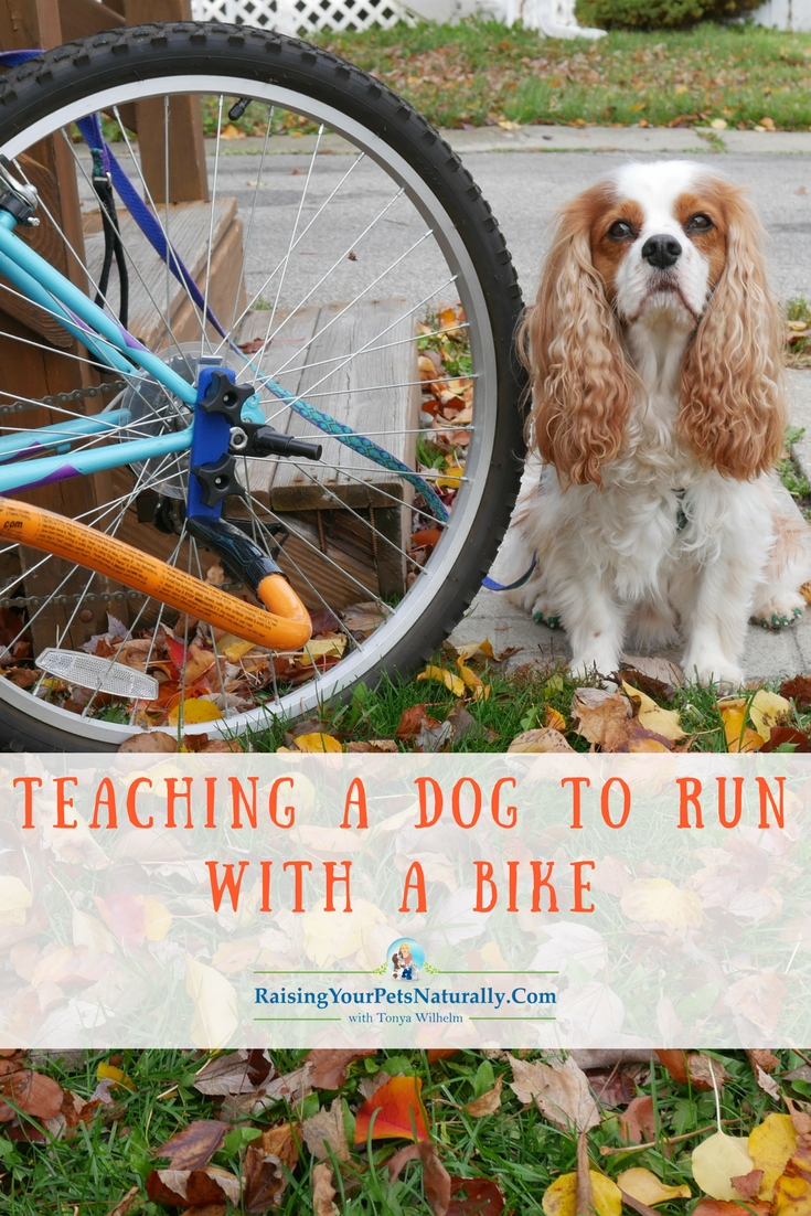 Outdoor Dog Activities: How to Introduce Your Dog to Biking. Teaching a Dog to Run with a Bike Safely. #raisingyourpetsnaturally #dogactivities #doggames #dogbike