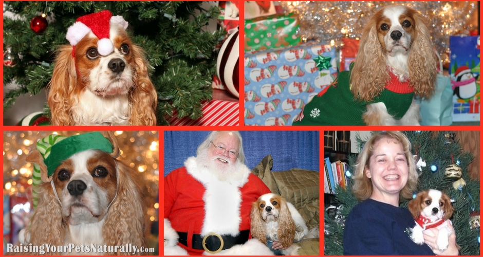 holidays with dogs Archives ~ Raising Your Pets Naturally
