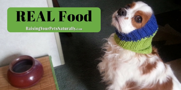 Best Dog Food For Puppies: What Is The Best Dog Food Dog Nutrition and Holistic Pet Care and Food