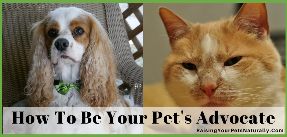 Should You Get A Second Opinion On Your Pet's Care? Learn how to be your pet's advocate in their daily lives. They are counting on YOU! #raisingyourpetsnaturally
