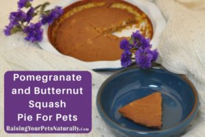 Pomegranate and Butternut Squash Pie For Dogs, Cats and Pets