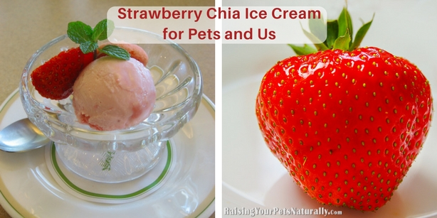 Healthy and Homemade Dog Treat Recipes | Homemade Strawberry Ice Cream for Dogs No dairy, no sugar, just natural dog treat ingredients. #raisingyourpetsnaturally