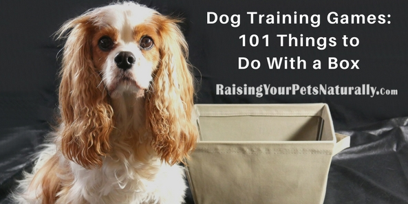 Clicker dog and cat training is not only a creative way to train your pet & Dog Training Games: Clicker Training Games | 101 Things to Do With ... Aboutintivar.Com