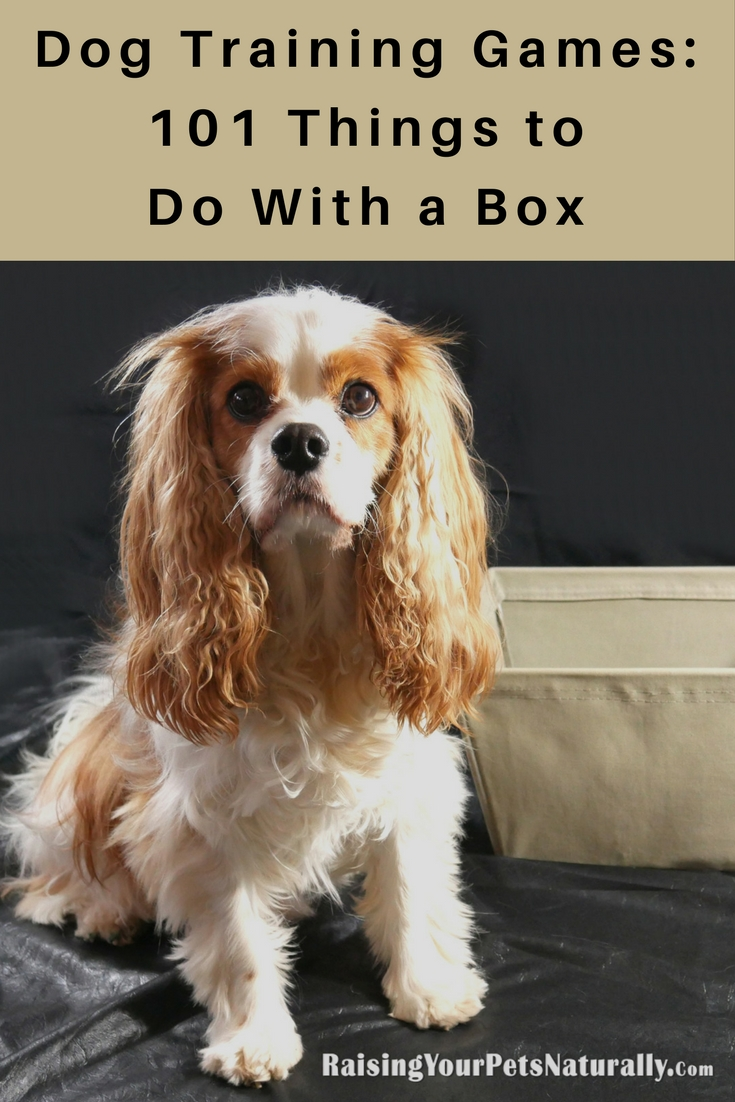 Clicker dog and cat training is not only a creative way to train your pet, but a very effective and easy way to train. Learn how to play 101 Things to Do with a Box! #raisingyourpetsnaturally