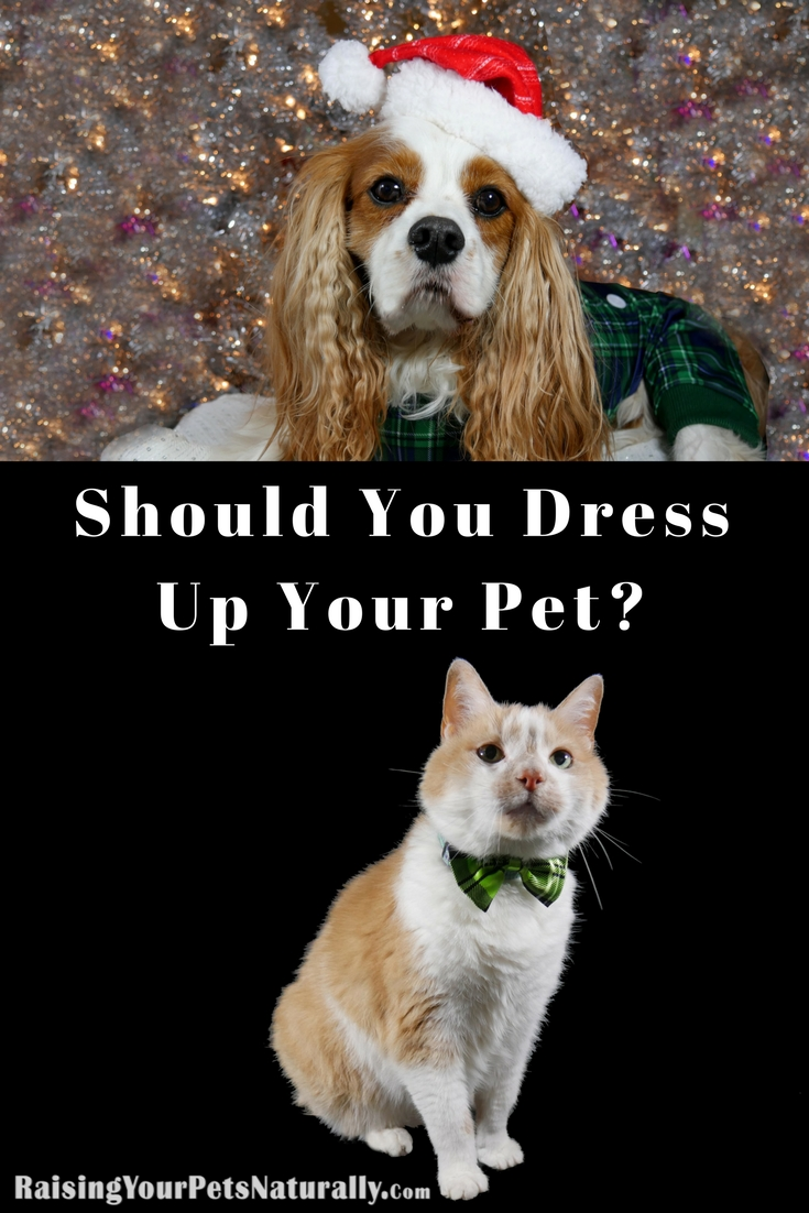 Today is National Dress Your Pet Day. A lot of these fun daily holidays are harmless, but unfortunately, sometimes they can mean putting your pet in a situation they are uncomfortable with. Should you dress up your dog or cat on Dress Your Pet Day? Well, that really depends on your pet. Here are three things to consider before grabbing a pet costume and slapping it on your helpless pet.