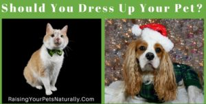 Should You Dress Up Your Dog, Cat or Pet? Dress Your Pet Day