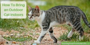 Bringing an Outdoor Cat Indoors, How To Bring an Outdoor Cat Indoors