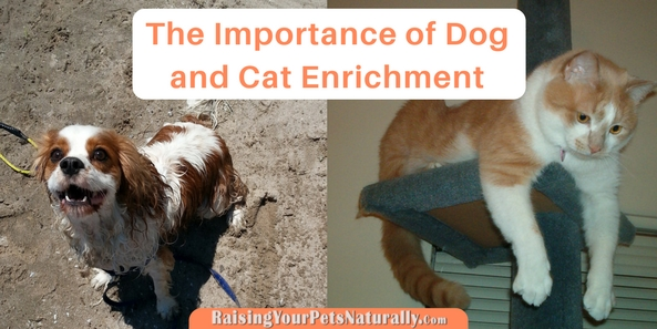 Dog and Cat enrichment is so important for a pet's well-being. Dogs and cats are very smart and engaged animals that need activity and mental stimulation in order to thrive. Learn how to keep your pets engaged. #raisingyourpetsnaturally