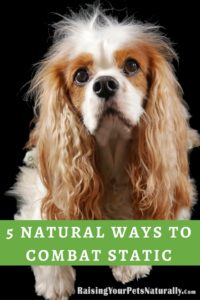 "Here are five ways to naturally help combat static electricity in your home and with your pet. Pets often receive the brunt of static shock with their fuzzy feet walking on carpet, then touching the metal water bowl or another surface. Some pets can even become fearful or agitated during winter months, possibly due to the ""unknown shock."""