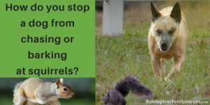 How do you stop a dog from chasing or barking at squirrels?