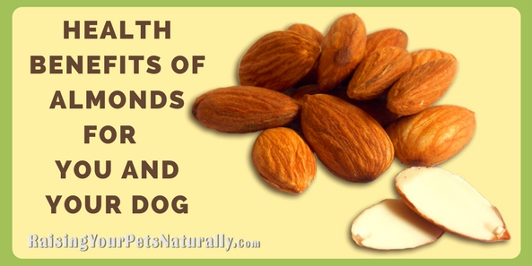 The Health Benefits of Almonds for You and Your Dog | Almonds For Dogs. Have you ever wondered if almonds were safe for dogs? Can you give your dog an almond or use organic almond butter in his interactive dog chew toy? You may have heard that almonds are toxic to dogs, but that statement isn't totally accurate.