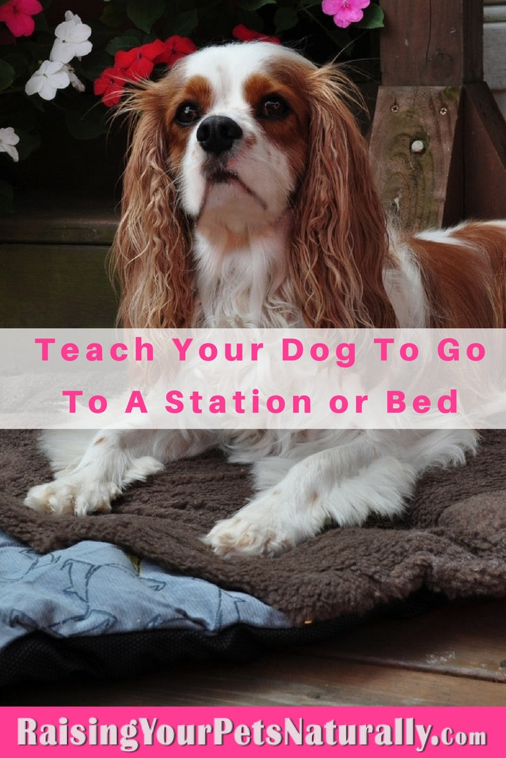 Cool Tricks to Teach Your Dog |Teaching Your Dog to Go to His Bed or Station. Teaching your dog to go to a specific place on cue and stay can help in a variety of ways. You can teach your dog to go to his spot when the doorbell rings, when you're eating dinner, or even when you want to clean up a spill. It's a great behavior to use when teaching a variety ofdog tricksandfreestyle dog dancing.
