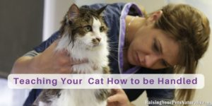 Teaching Your Kitten or Adult Cat How to be Groomed, Handled, or Petted
