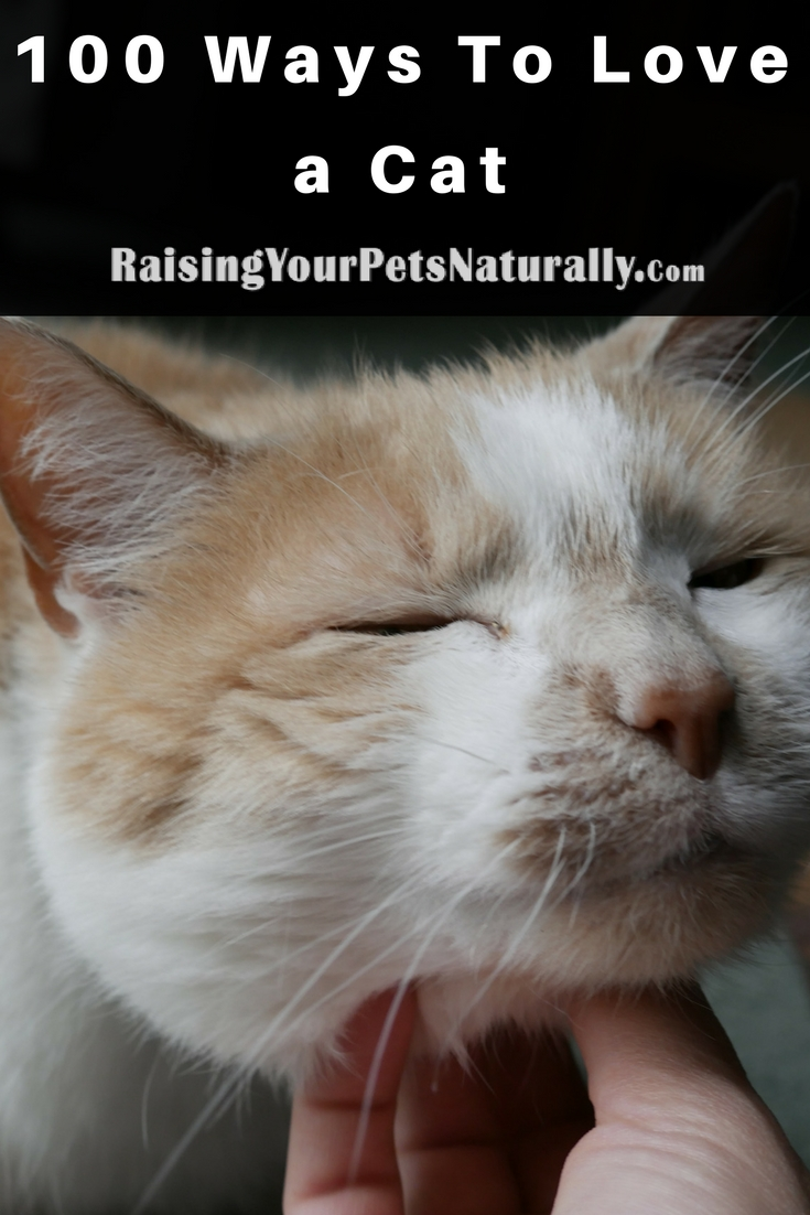 100 Ways To Love a Cat. Have you ever wondered how to show your cat affection or that you love him? Here are some ways to show your cat affection. #raisingyourpetsnaturally