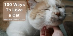 100 Ways to Love a Cat | How To Show Your Cat You Love Him