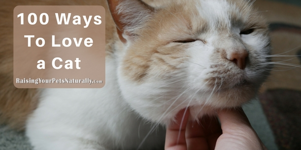 100 Ways To Love a Cat Have you ever wondered how to show your cat affection or that you love him? Okay, so this post won't be 100 ways to love a cat, but 5 ways you can show your cat affection and that you care about him and love him.