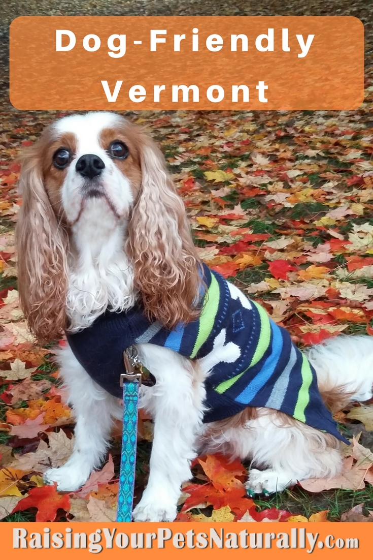 Dog-Friendly Vermont Vacations. Vacations with your dog have never been easier. This fun and informative page documents my dog-friendly travels with Dexter across the United States and Canada. Dexter and I travel for fun and for work when I'm on a speaking engagement.