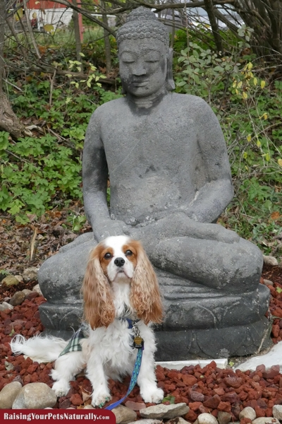Dog-friendly Vermont hotels, accommodations and vacations