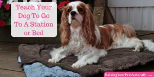 Dog Tricks | How To Teach Your Dog To Go To A Station, Mat or Bed