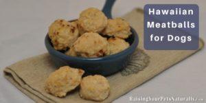 Healthy Homemade Dog Treat Recipes | Hawaiian Meatballs for Dogs