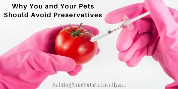 Flip over your pet's treats or even their toothpaste, and you may be surprised at what's lurking inside.Why You and Your Pets Should Avoid Preservatives Such As Sodium Benzoate and Potassium Sorbate. #raisingyourpetsnaturally