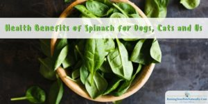 Can Dogs Eat Spinach? Can Cats Eat Spinach? Health Benefits of Spinach
