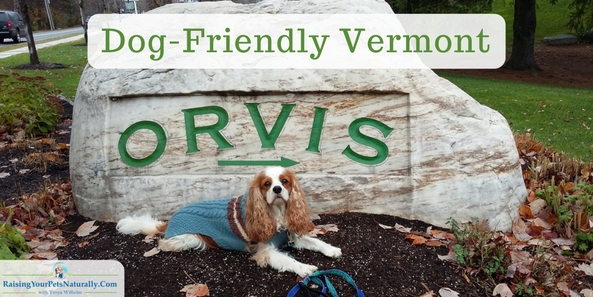 Dog-Friendly Vacations in Manchester, Vermont | Dog-Friendly