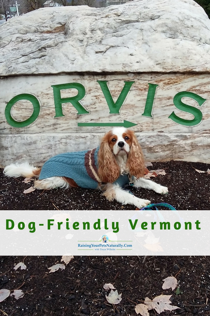 Dog-Friendly Vacations in Manchester, Vermont | Dog-Friendly Stores