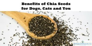 Benefits of Chia Seeds | Chia Seeds for Dogs, Cats and You