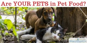 Healthy and Not Healthy Pet Food Ingredients | Poultry, Fish, Meat and Animal