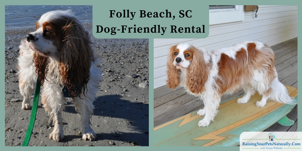 "Dog-friendly vacations: Folly Beach rentals that are pet friendly. The family decided to take our spring dog-friendly vacation to South Carolina and stay in Folly Beach. We are most defiantly a beach family. We rented ""Close To The Edge,"" a great 3-bedroom beach house rental through VRBO (Vacation Rentals By Owner, part of the HomeAway Family)."