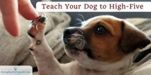 Dog Tricks to Teach Your Dog | Teach Your Dog to High-Five