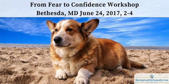 Fearful and Shy Dog Training Classes and Workshops in Bethesda/ Washington DC, Area