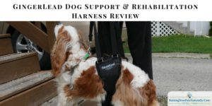 Products for Special Needs Dogs | GingerLead Review