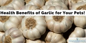 Health Benefits of Garlic | Is Garlic Toxic to Dogs and Cats?